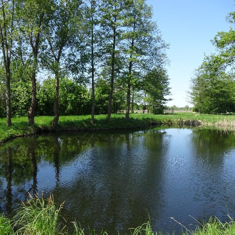 Hofeigener Teich