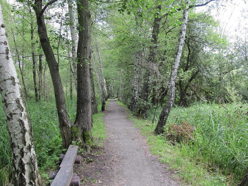 Radfahren im Spreewald