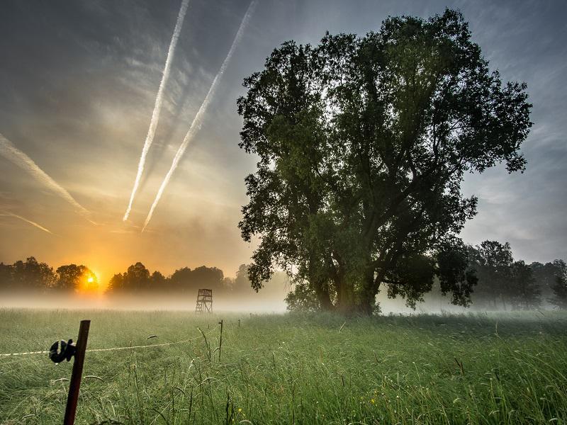 Spreewaldwiesen