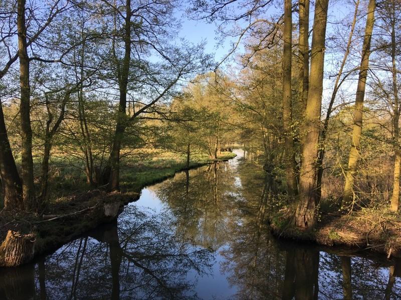 Der Spreewald Natur pur